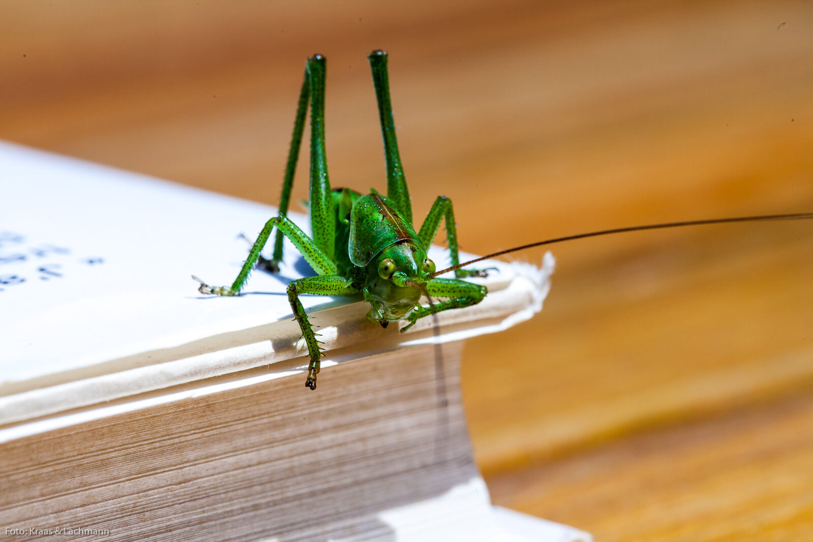 Die Welt der Insekten ist faszinierend. Wir sollten diese Tiere nicht unterschätzen.