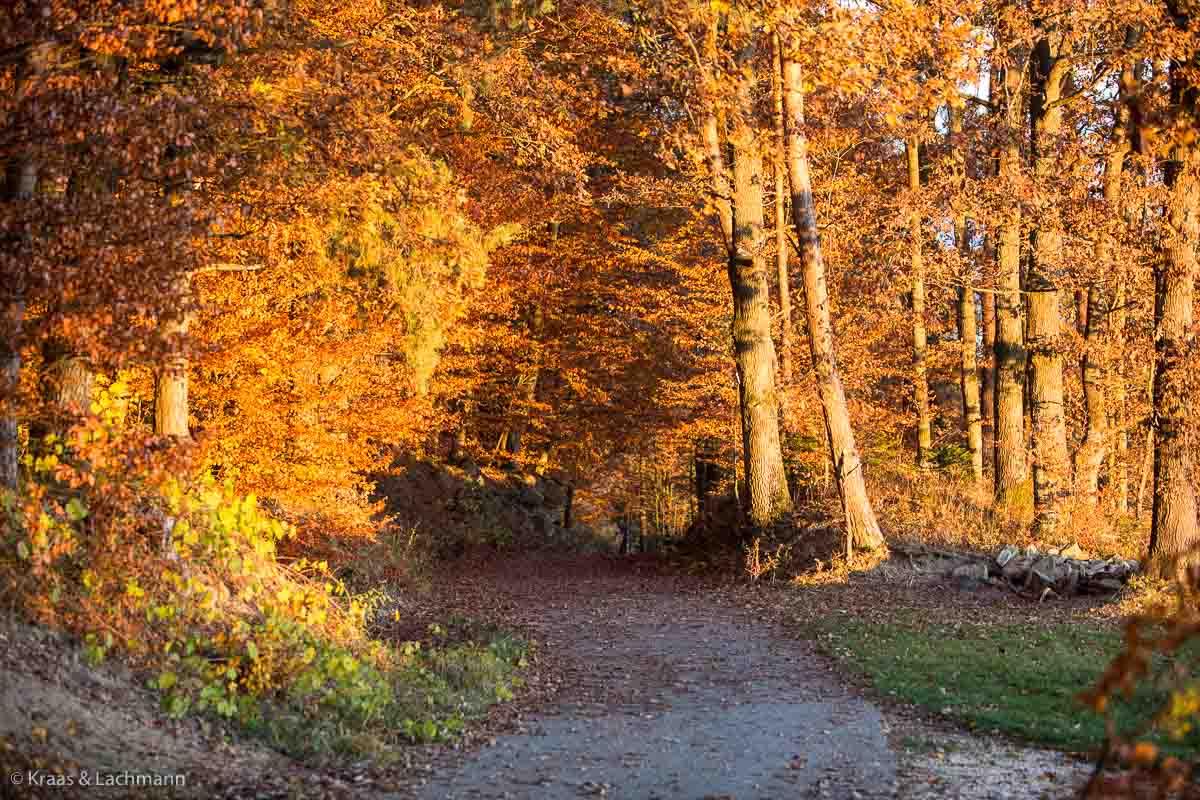 Noch ist es nicht so weit, aber bald können wir diese Farbenpracht bei einem Herbstspaziergang genießen.