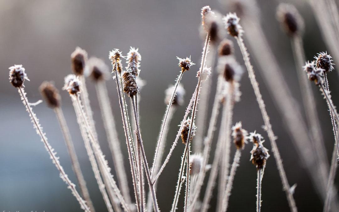 Haarpflege in der kalten Jahreszeit
