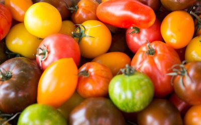 Tomaten für die Haare