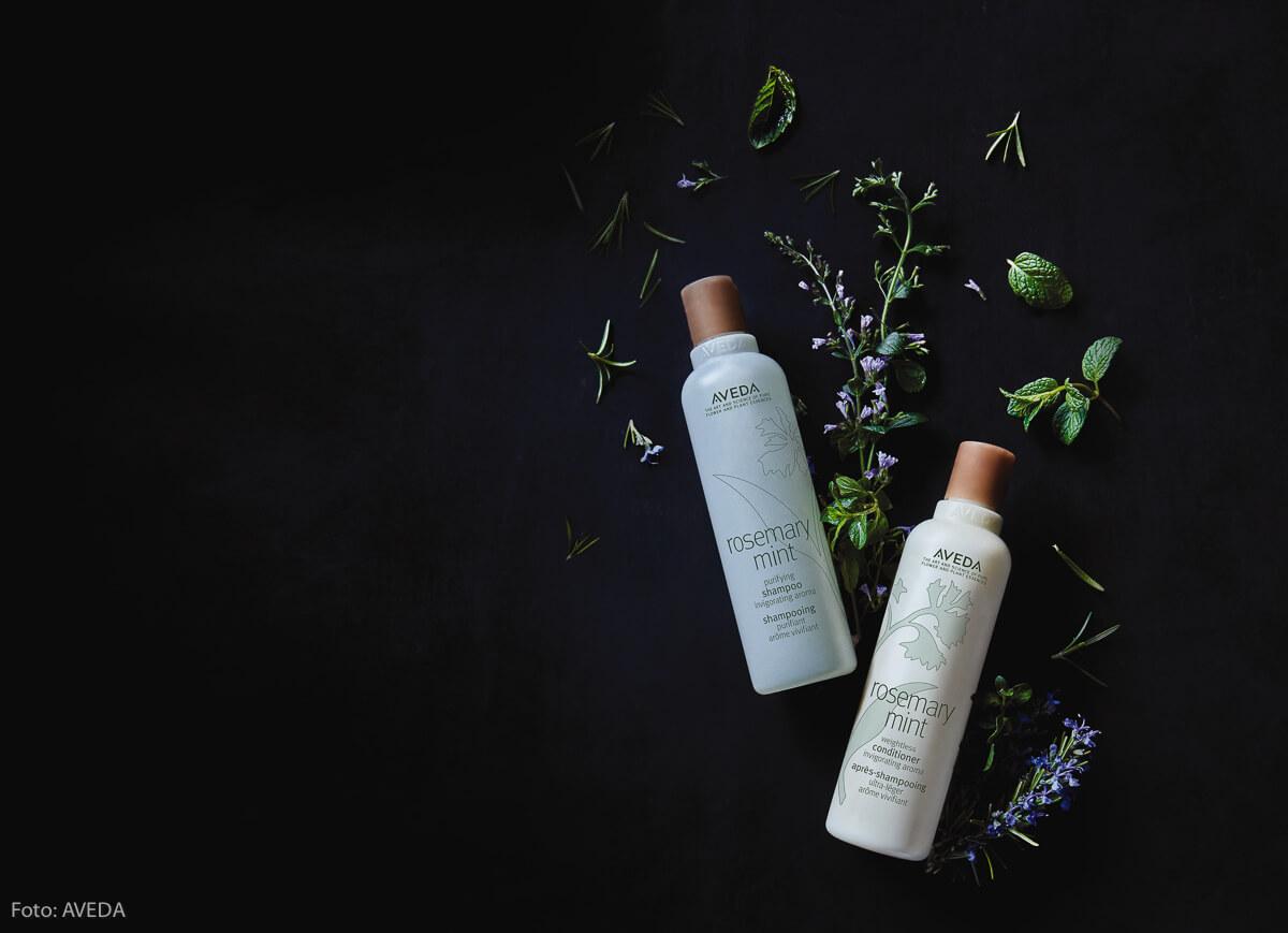 AVEDA Rosemary-Mint Serie: Rosmarin-Haarpflege-Aveda-Daniel-Schmid-Friseur