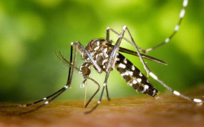 Auch Mücken lieben den Sommer