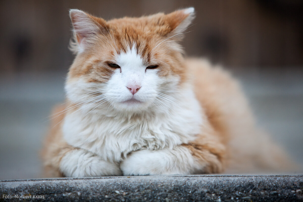 Ob Katze oder Hund – Tiere haben es gut: sie leben immer im Hier und Jetzt Doch Achtung, wenn man sie streichelt, können sie davon nicht genug bekommen!