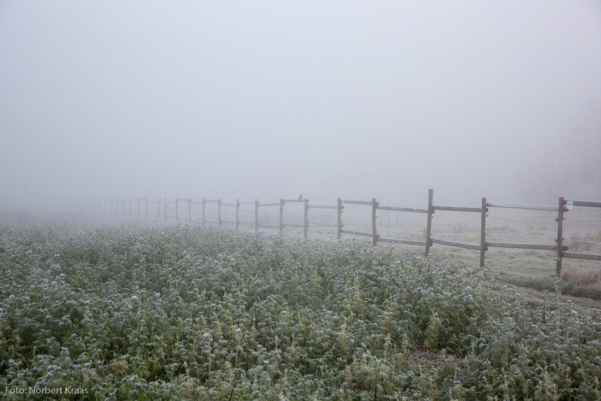 Fein verteilte Wassertröpfchen in der Luft sorgen bei einem Spaziergang im Nebel für viel Feuchtigkeit