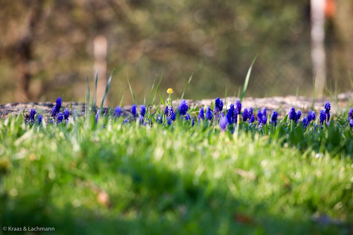 Wie war das noch bei Mörike? Frühling lässt sein blaues Band ...