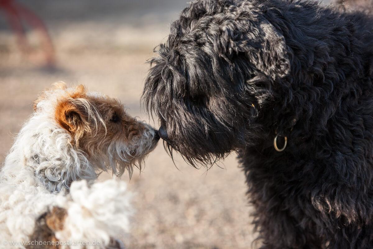 Supernasen! Für Hunde dient das Riechorgan zur Orientierung, der Geruchssinn ist ihr wichtigster Sinn
