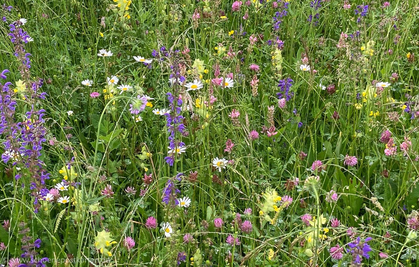 Eine Blumenwiese, die länger blühen darf, ist ein Paradies für Insekten.